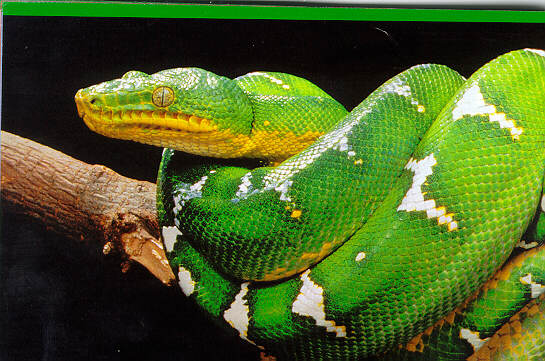 Amazon Jungle Animals Snake | www.pixshark.com - Images ...